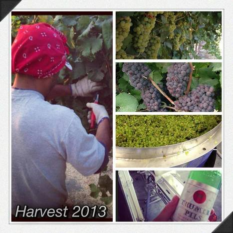 Harvest 2013 is Here!! | Wine Talk | Scoop.it