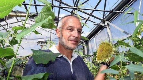 Et si les plantes avaient des yeux et un cerveau ? L'incroyable étude d'un biologiste. | EntomoScience | Scoop.it
