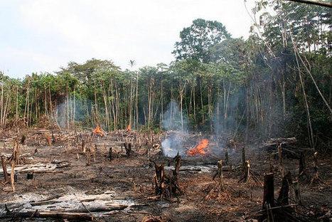 Bosques en peligro: cerca de 170 millones de hectáreas a punto de perderse   Educacion, ecologia y TIC   Scoop.it