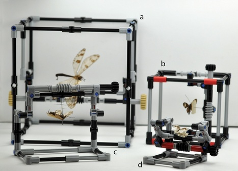 How scientists are using Lego to handle insects / Pour mieux étudier les insectes, un scientifique utilise des Lego | EntomoNews | Scoop.it
