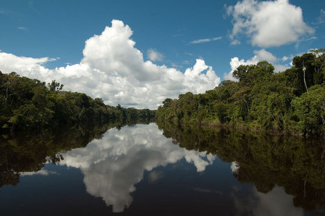 Study: Amazon Rainforest Estimated to Have 16,000 Species of Trees | how important is the Amazon rainforest | Scoop.it