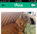 Twitter rolls out Vine app for Android   Educational Technology - Yeshiva Edition   Scoop.it
