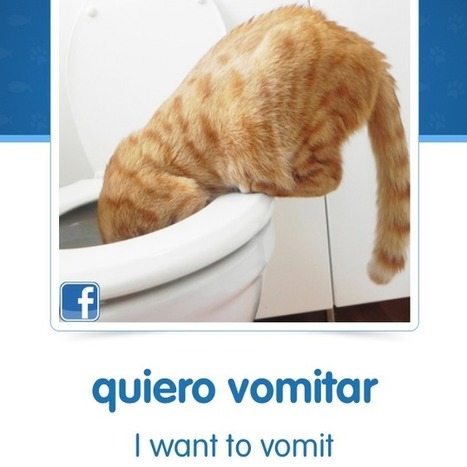 I Can Haz Spanish Lessons: Cat Pictures Now Have A Purpose | Feline Health and News - manhattancats.com | Scoop.it
