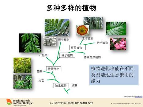 """Why Study Plants?"" is now available in Chinese 