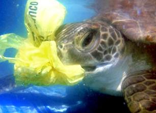Silent Killers: The Danger of Plastic Bags to Marine Life | Leatherback Sea Turtles | Scoop.it