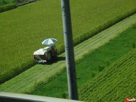 Réformer l'agriculture japonaise sans la sacrifier dans les négociations commerciales » Japon Facile | Affaires Internationales | Scoop.it