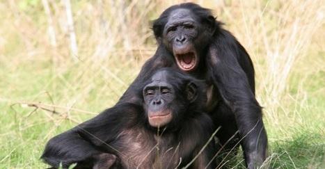 Communicants publics : des bonobos dans la jungle territoriale | blog-territorial & communication publique | Scoop.it