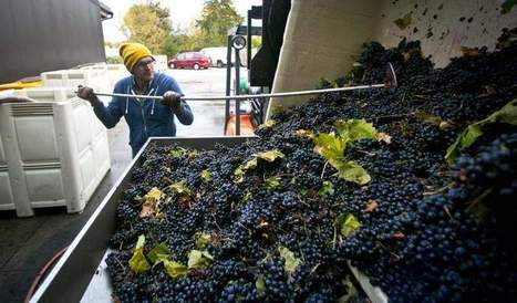 IOWA. It's not just for Primaries anymore. From vine to wine | Southern California Wine and Craft Spirits Journal | Scoop.it