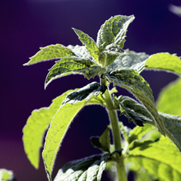Plants can use quantum physics even if we can't - msnNOW | Rule your world | Scoop.it