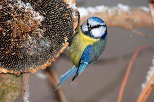 Comment aider les oiseaux du ciel durant l'hiver ?   Communiqués de Zoomalia.com   Patrimoine   Scoop.it