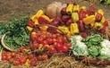 La filière courte fruits et légumes prend du poids en Italie | Agriculture locale | Scoop.it
