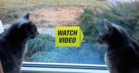 I Walked In On My Cats, You Won't Believe What I Caught Them ... | Cats | Scoop.it
