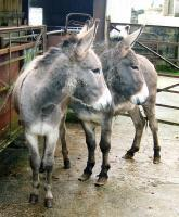 Rescued Brian and Sean will be warm this winter | The Donkey Sanctuary | Animal Cruelty | Scoop.it