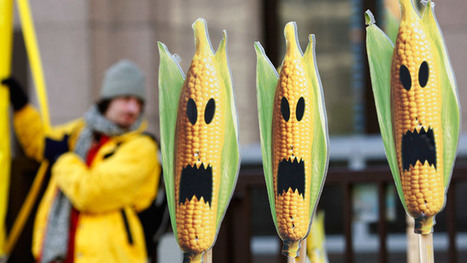 ​GMO Producers Should Be Punished As Terrorists, Russian MPs Say | Permaculture, Homesteading, Ecology, & Bio-Remediation | Scoop.it