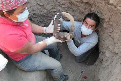 Archaeologists find human remains of about 28 individuals thought to be approximately 1,500-2,500 years old | Art Daily | Kiosque du monde : Amériques | Scoop.it