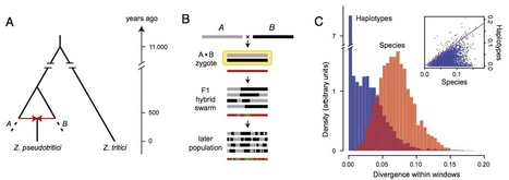 PNAS: Fusion of two divergent fungal individuals led to the recent emergence of a unique widespread pathogen species (2012) | Plant Genomics | Scoop.it