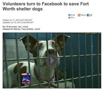 5 Lessons Learned from the Fort Worth Animal Shelter Scramble ... | Animals R Us | Scoop.it
