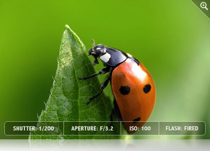 """Photographing Insects 