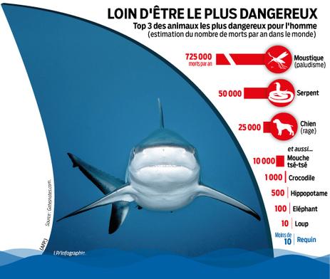 Philippe Cousteau : «Les requins sont essentiels à nos océans» | De Natura Rerum | Scoop.it