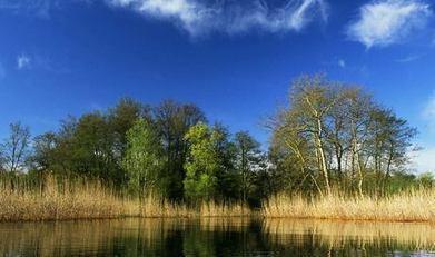 Palude Brabbia: 30 anni di oasi naturale a Varese - InInsubria | Eco Bike Hotel Ungheria Varese 1946 | Scoop.it