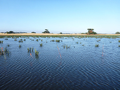 Scientists look at role of wetlands in battle against climate change | Organic Farming | Scoop.it
