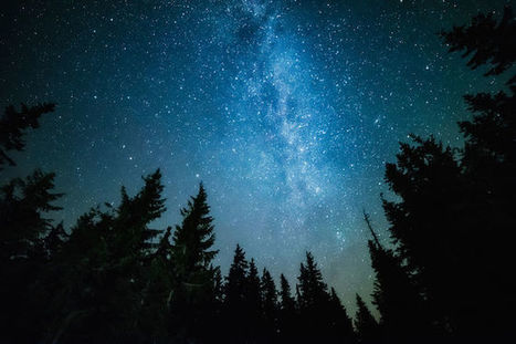 Do Trees Sleep at Night? LiveScience | Tree News | Scoop.it