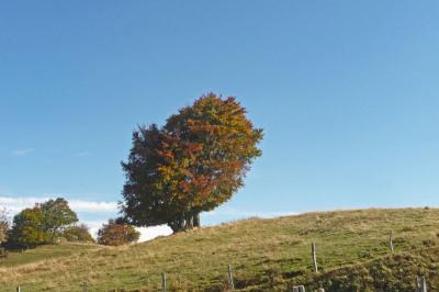 L'arbre… | The Blog's Revue by OlivierSC | Scoop.it