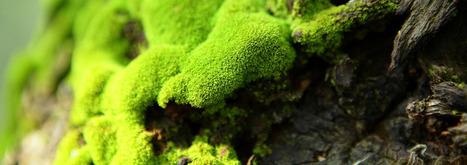Ecoflora, pépinière de plantes sauvages et aromatiques | Shabba's Yard | Scoop.it