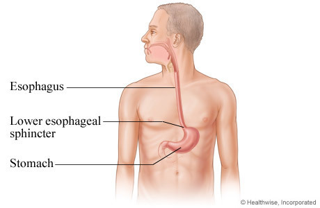 Gastrointestinal Pearls for the Cardiovascular Clinician | Heart and Vascular Health | Scoop.it