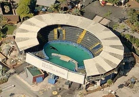Time running out for lonely orca Lolita at Miami Seaquarium | Dolphins | Scoop.it