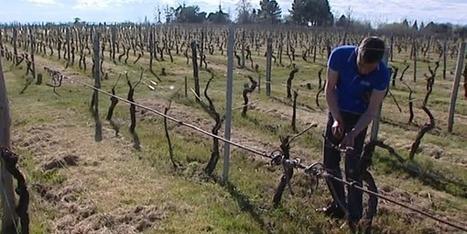Le trader devenu vigneron : histoire d'une reconversion   Le vin quotidien   Scoop.it