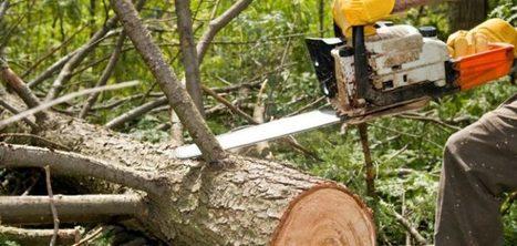 Beavercreek Tree Care LLC provide professional tree service | Beavercreek Tree Care LLC | Scoop.it