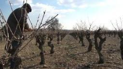 Lutter contre le sel dans les vignes | Le Vin et + encore | Scoop.it
