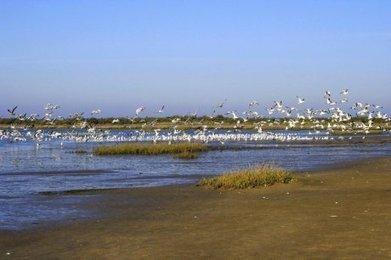 Tourisme : c'est parti pour la saison - Sud Ouest | Tourisme sur le Bassin d'Arcachon | Scoop.it