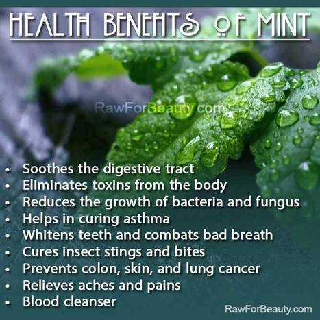 Health Benefits of Mint | Belize Food | Scoop.it