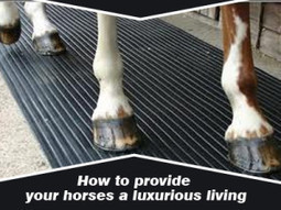 How to provide your horses a luxurious living | Rubber Flooring | Scoop.it