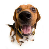 How Pooches Can Replace Drugs : DNews | Animals R Us | Scoop.it