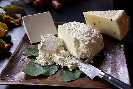 Ricotta Worth Hunting For | Foodies | Scoop.it