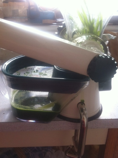 Starting A Raw Food Diet: Wheatgrass juice - how to start drinking it | Raw Food Diet | Scoop.it