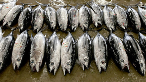 Sorting Out the Risks of Fish   @FoodMeditations Time   Scoop.it