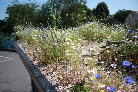 Des ruches sur les toits oui … mais avec un écosystème adéquat ! | Nouveaux comportements & accompagnement aux changements | Scoop.it