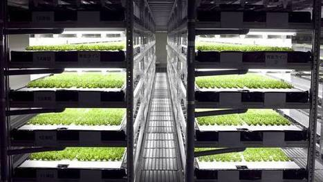 Automated indoor vertical farm will produce 30,000 heads of lettuce per day | Fruits & légumes à l'international | Scoop.it