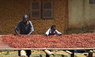 Theo: the small chocolate company taking big strides in the DRC | Linking small holder farmers to markets | Scoop.it