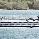 Environment groups to appeal court decision allowing re-export of dolphins   Earth Island Institute Philippines   Scoop.it