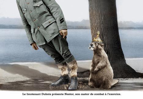 Le castor, l'arme secrète des Britanniques contre les inondations | Intervalles | Scoop.it