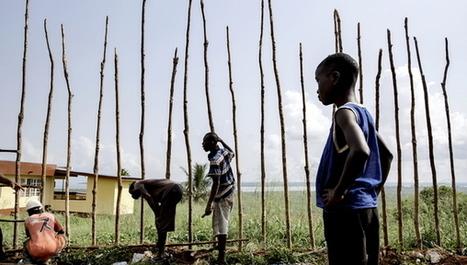 Ebola worsens food crisis in West Africa   IRIS Geopolitics of Grain   Scoop.it