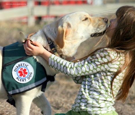 Des chiens d'assistance pour les patients atteints de diabète - Infirmiers.com   Les actus scientifiques   Scoop.it