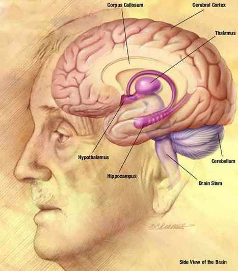 Study Finds Learning by Repetition Impairs Recall of Details | Brain-Mind Psychology | Scoop.it
