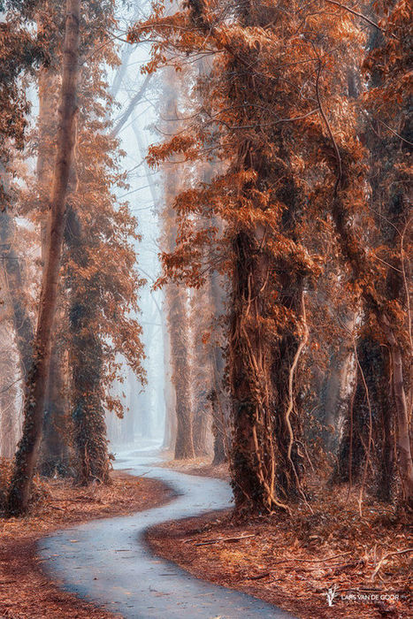 Path without a name by Lars van de Goor | My Photo | Scoop.it