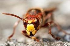 L'Europe en guerre contre les espèces invasives, Actualités générales - Pleinchamp   Les espèces invasives   Scoop.it